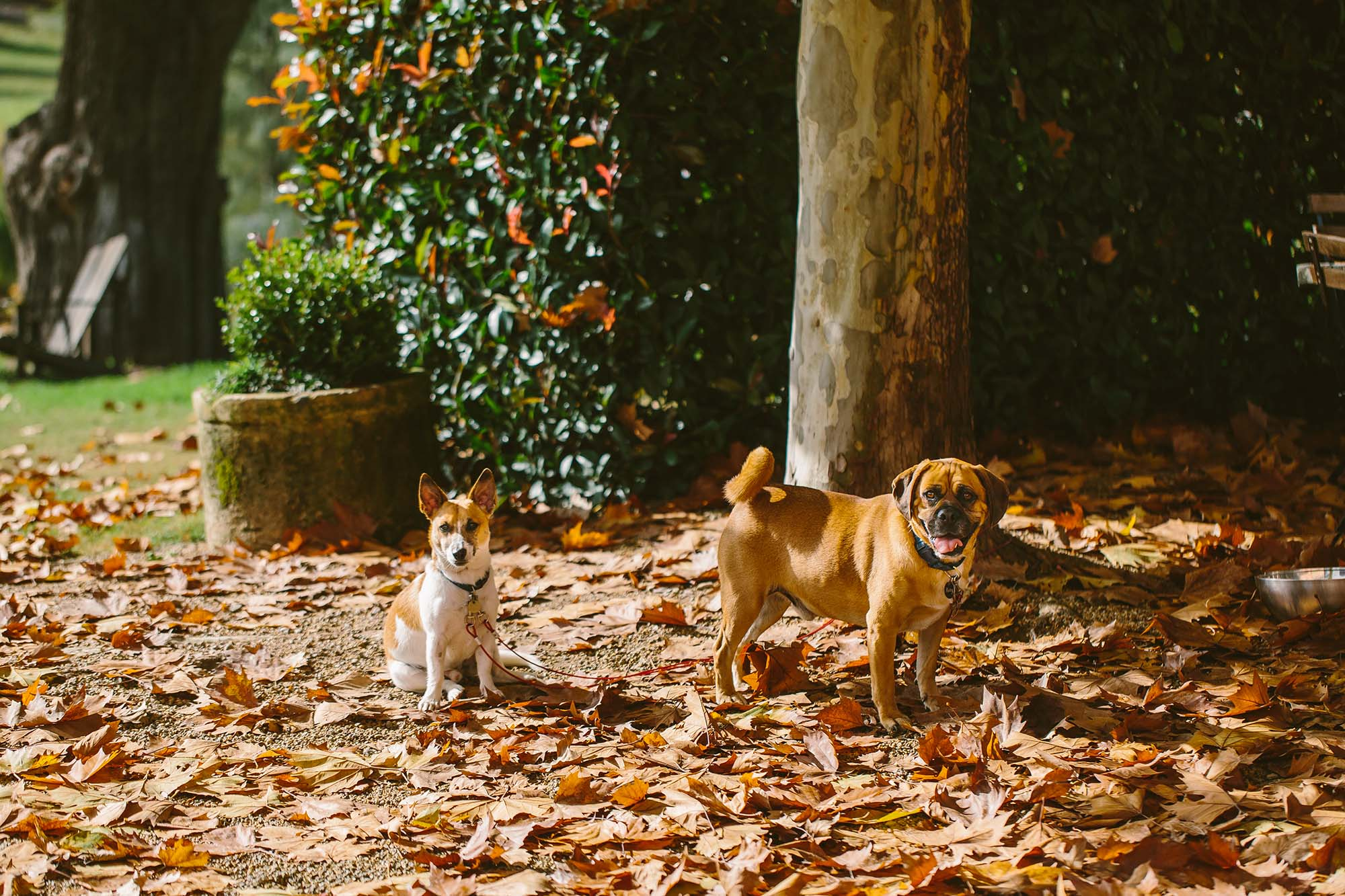 how to include your dog at your elopement